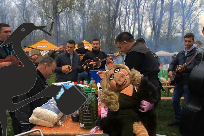 PIJANA ČAPLJA Miss Piggy, počasna gošća Pečenkijade nestala!