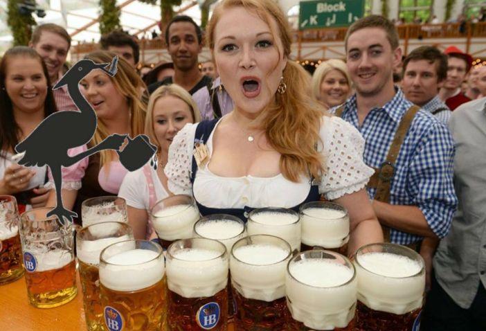 PIJANA ČAPLJA Skandal na 1. Brodskom festivalu piva – piva nestalo već na pivskom doručku!