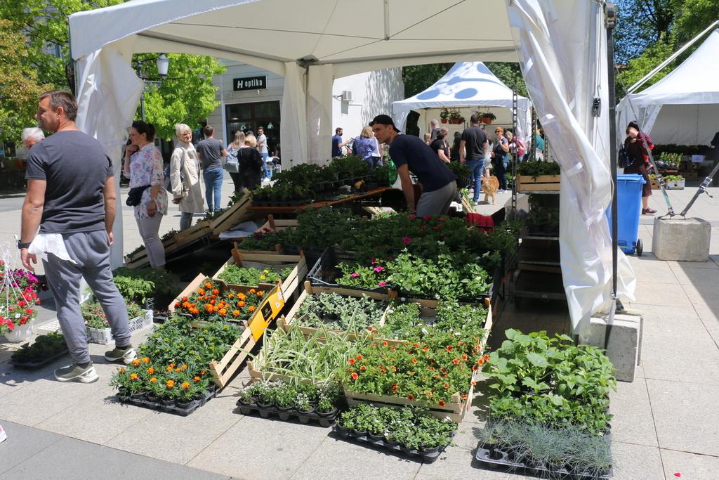 Organizirana prodaja cvijeća na Trgu Ivane Brlić-Mažuranić