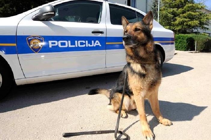 """Policijski pas """"Jack"""" ponovo uspješan u pronalasku droge"""