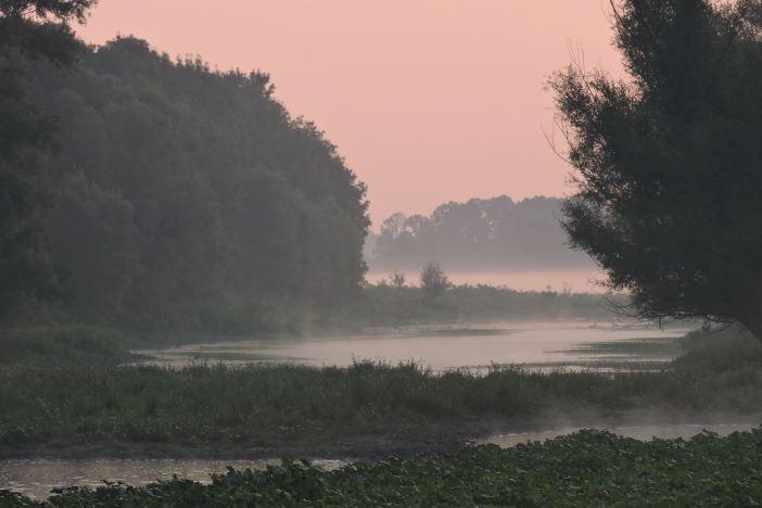 Vlažna staništa pomažu nam u borbi s klimatskim promjenama!