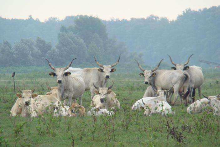Na Gajni stručnjaci i uzgajivači raspravljali o očuvanju slavonsko-srijemskog podolca u RH