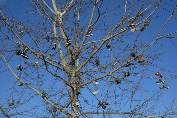Stablo kraj skejt parka okićeno starim tenisicama