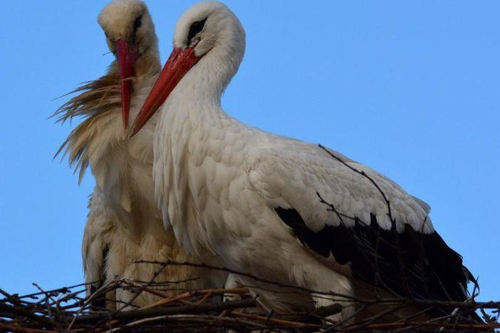 Malena i Klepetan postaju zvijezde scene: 26. travnja u Žar ptici premijera o najpoznatijem životinjskom paru