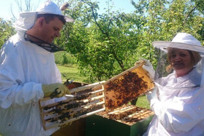 """Proizvode """"pčelinje mlijeko"""" eliksir života"""