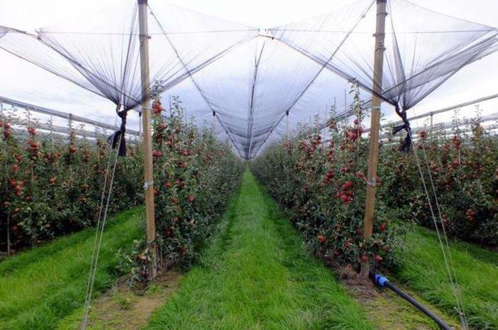 U Trnjanima brdo jabuka koje nitko ne želi