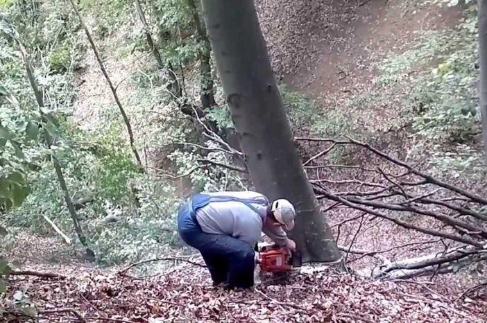 Posao za 10 šumskih radnika