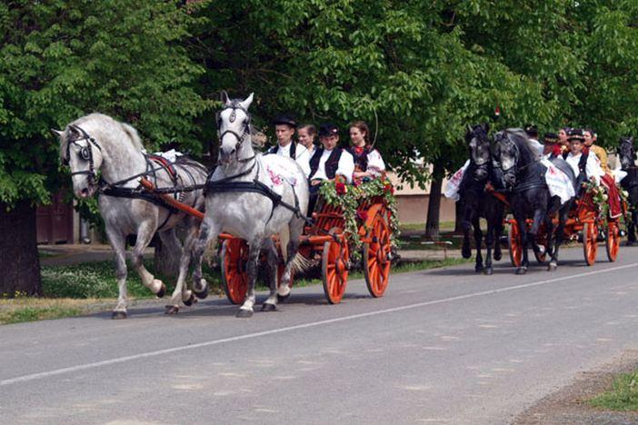 Razigrane grive za otvorenje sezone konjogojskih manifestacija