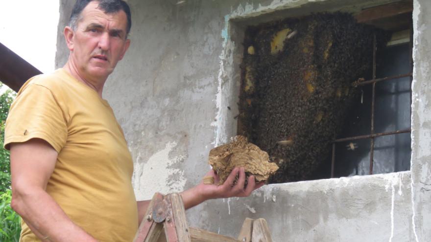 Odbjegle pčele formirale zajednicu u prozoru kuće