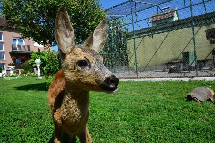 Život iz bajke slavonskog Bambija